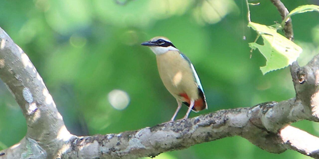 Chitwan National Park Birding Tour