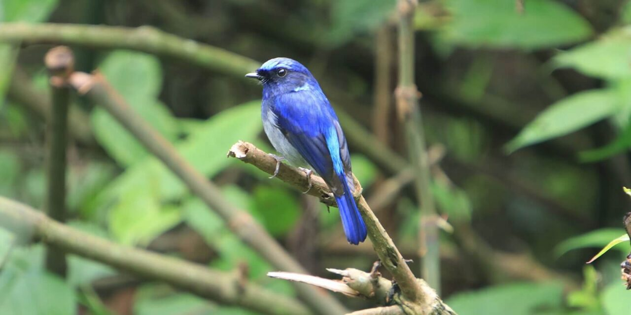 Godawari and Phulchoki Bird Watching Tour
