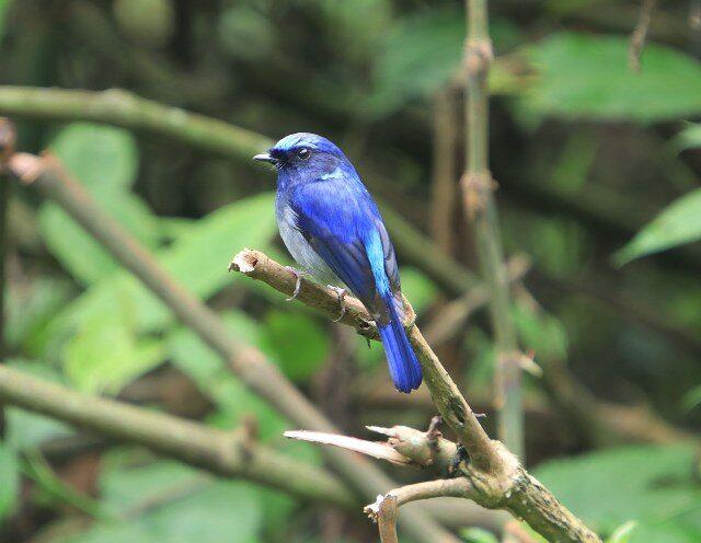 https://nepalhimalayantrails.com/wp-content/uploads/2021/03/bird-watching-nepal-godawari-kathmandu-valley_27_800x496-640x496.jpg
