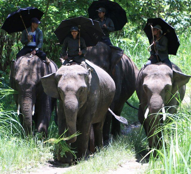 https://nepalhimalayantrails.com/wp-content/uploads/2021/03/tour-nepal-chitwan-national-park-elephant-safari-himalayantrails-trekking_2_800x582-640x582.jpg