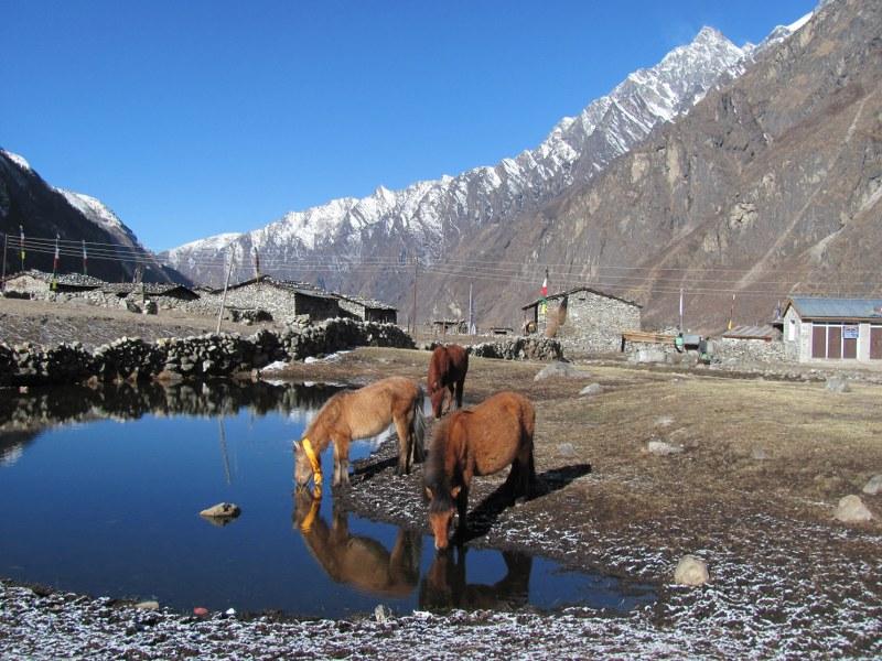 Explore Langtang National Park | Himalayan Trails Trekking